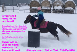 Cherry - Game Pony For Sale Wisconsin